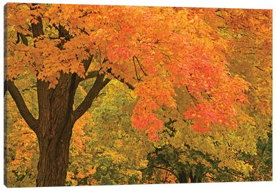 Autumn Splendor Canvas Art Print