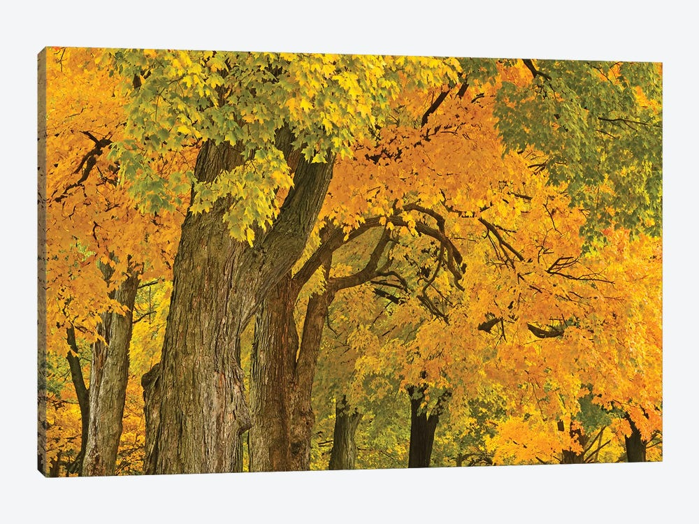 Colors Of Fall by Brian Wolf 1-piece Canvas Artwork