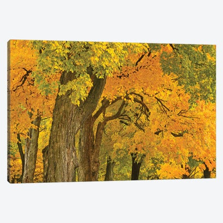 Colors Of Fall Canvas Print #BWF415} by Brian Wolf Canvas Wall Art