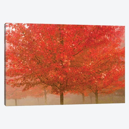 Foggy Morning Maples Canvas Print #BWF417} by Brian Wolf Canvas Art