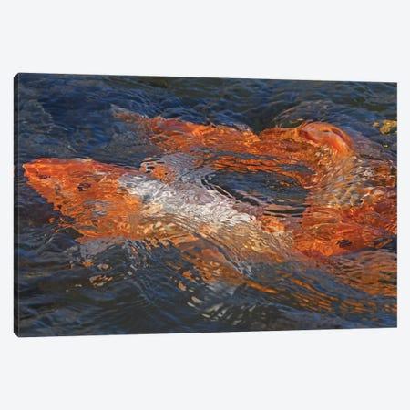 Koi Abstract Canvas Print #BWF424} by Brian Wolf Canvas Print