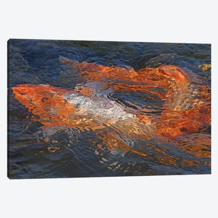 Koi Abstract Canvas Print #BWF424} by Brian Wolf Canvas Print