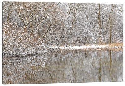Springtime Snow Pond Reflections Canvas Art Print