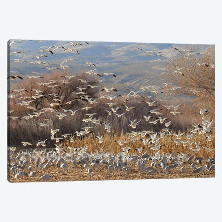 Feeding Frenzy Canvas Print #BWF438} by Brian Wolf Art Print