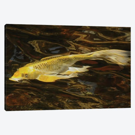 Fancy Koi - Abstract Canvas Print #BWF441} by Brian Wolf Canvas Art
