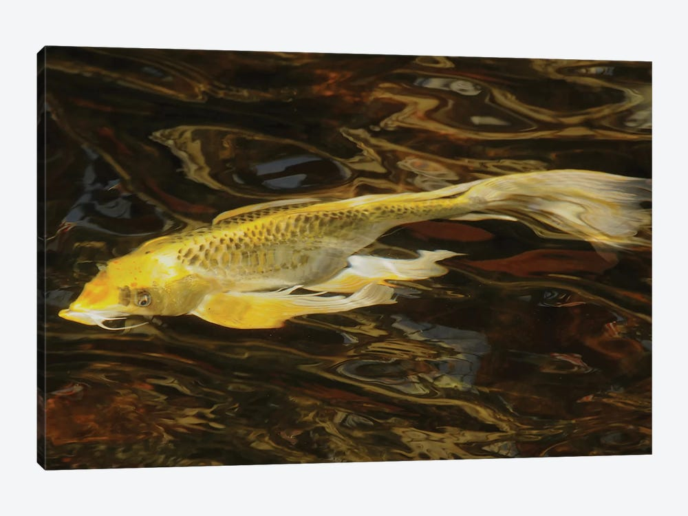 Fancy Koi - Abstract by Brian Wolf 1-piece Canvas Art Print