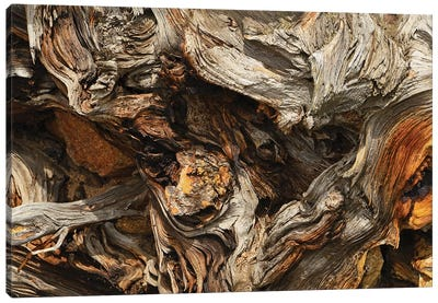 Tree Root Abstract Canvas Art Print