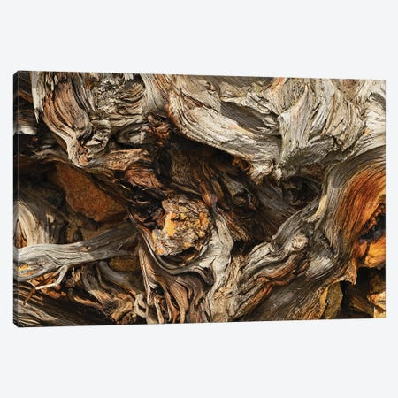 Tree Root Abstract Canvas Print #BWF448} by Brian Wolf Canvas Art