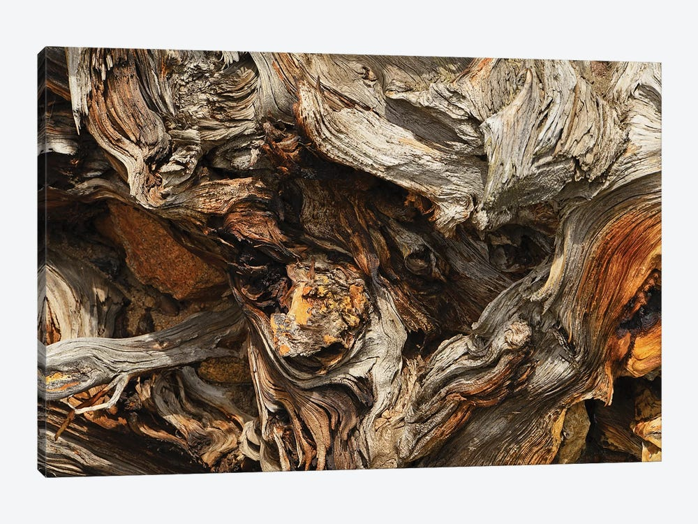 Tree Root Abstract by Brian Wolf 1-piece Canvas Wall Art