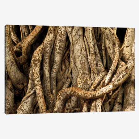 Banyon Tree Roots Canvas Print #BWF44} by Brian Wolf Canvas Artwork
