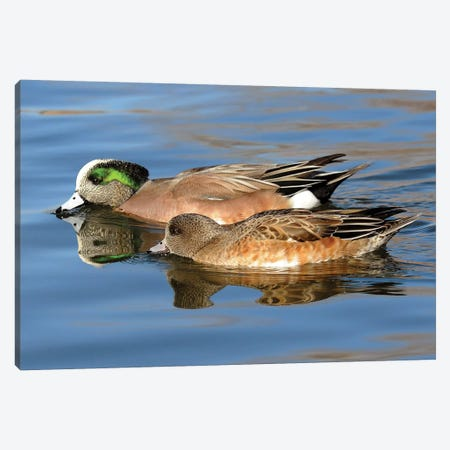 Widgeon Pair Canvas Print #BWF451} by Brian Wolf Canvas Art Print