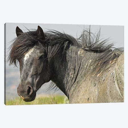 The Stallion Canvas Print #BWF453} by Brian Wolf Art Print