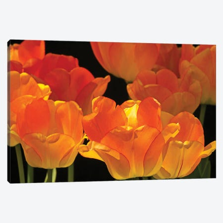 Flaming Tulips Canvas Print #BWF468} by Brian Wolf Canvas Wall Art