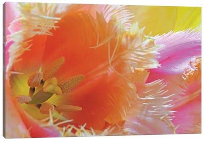 Colorfull Tulip Bouquet Canvas Art Print