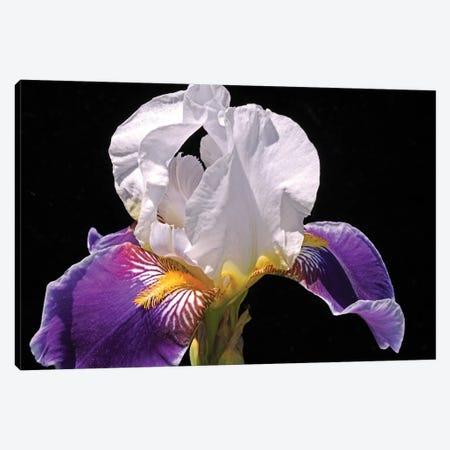 White And Purple Iris Canvas Print #BWF488} by Brian Wolf Canvas Art
