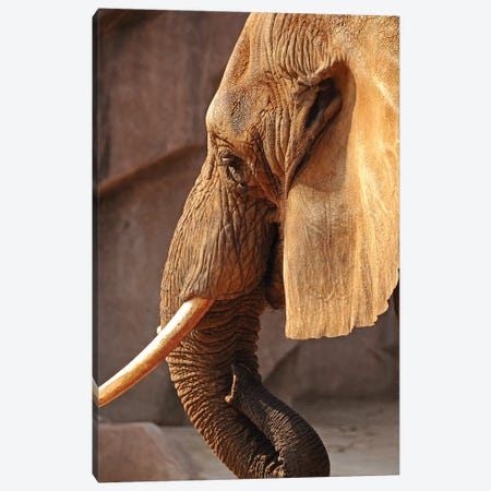 African Elephant - Vertical Canvas Print #BWF4} by Brian Wolf Canvas Wall Art