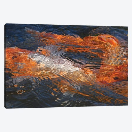Koi Colors Abstract Canvas Print #BWF520} by Brian Wolf Art Print