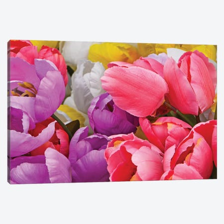 Assorted Colors - Tulips 3-Piece Canvas #BWF540} by Brian Wolf Canvas Print