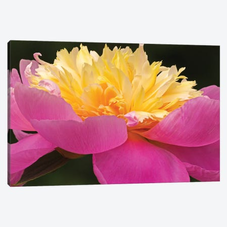 A Different Perspective - Peony 3-Piece Canvas #BWF545} by Brian Wolf Canvas Artwork