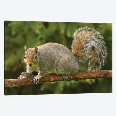 Squirrel Posing For The Camera Canvas Print #BWF551} by Brian Wolf Canvas Wall Art