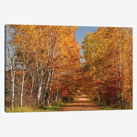 Country Road Canvas Print #BWF562} by Brian Wolf Canvas Print