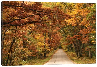 Back Road In Autumn Canvas Art Print