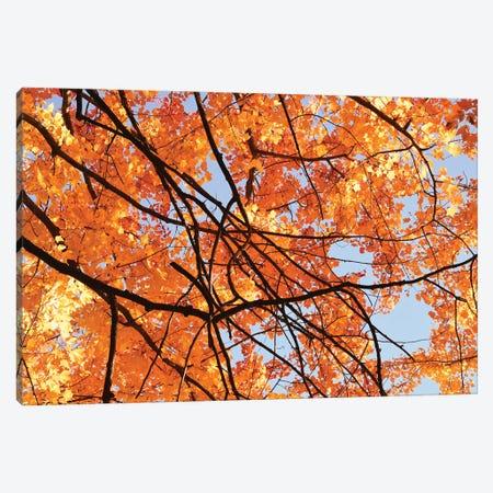 Autumn Patterns Canvas Print #BWF568} by Brian Wolf Canvas Print