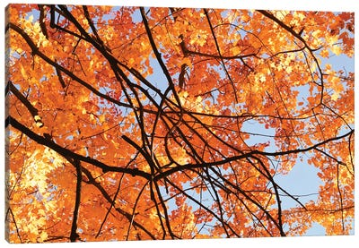 Autumn Patterns Canvas Art Print