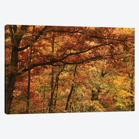 Autumn In The Oak Forest Canvas Print #BWF573} by Brian Wolf Canvas Art