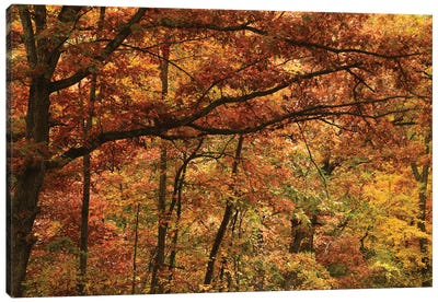 Autumn In The Oak Forest Canvas Art Print