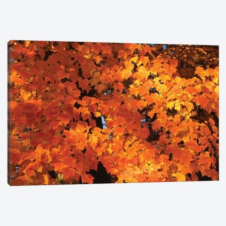 Orange Canvas Print #BWF576} by Brian Wolf Art Print