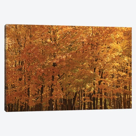 Maple Forest At Peak Canvas Print #BWF577} by Brian Wolf Canvas Print