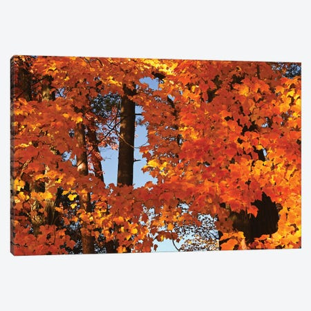 Window In The Maples Canvas Print #BWF578} by Brian Wolf Canvas Wall Art