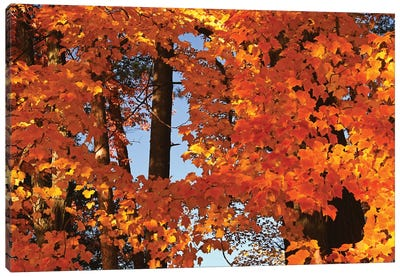 Window In The Maples Canvas Art Print