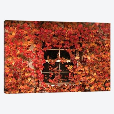 The Window Canvas Print #BWF580} by Brian Wolf Canvas Art Print