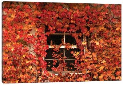 The Window Canvas Art Print