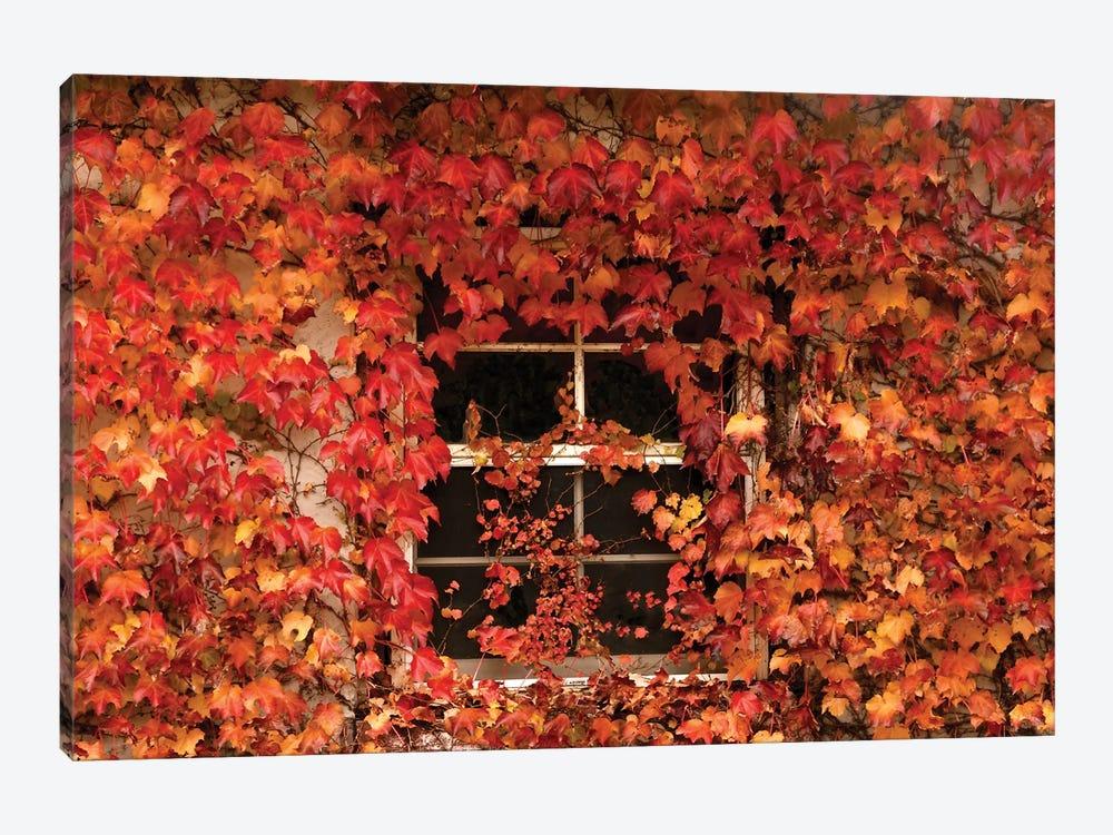 The Window by Brian Wolf 1-piece Art Print