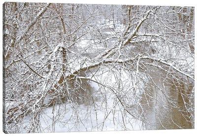 Fresh Snow On The Pike River Canvas Art Print