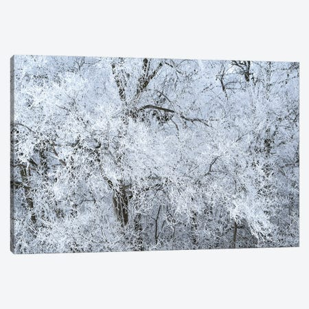 Rime Ice White Canvas Print #BWF589} by Brian Wolf Art Print
