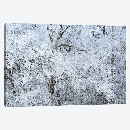 Rime Ice White Canvas Print #BWF589} by Brian Wolf Art Print