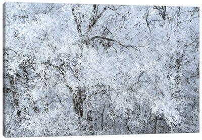 Rime Ice White Canvas Art Print