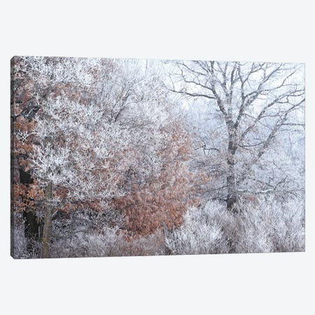 Rime Ice And Fog Canvas Print #BWF590} by Brian Wolf Canvas Wall Art