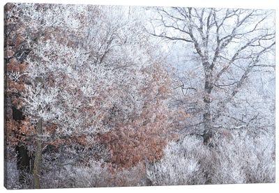 Rime Ice And Fog Canvas Art Print