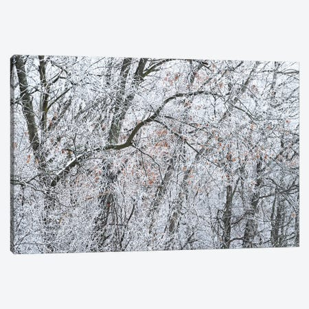 Ice On The Forest Canvas Print #BWF599} by Brian Wolf Canvas Artwork