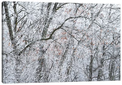 Ice On The Forest Canvas Art Print
