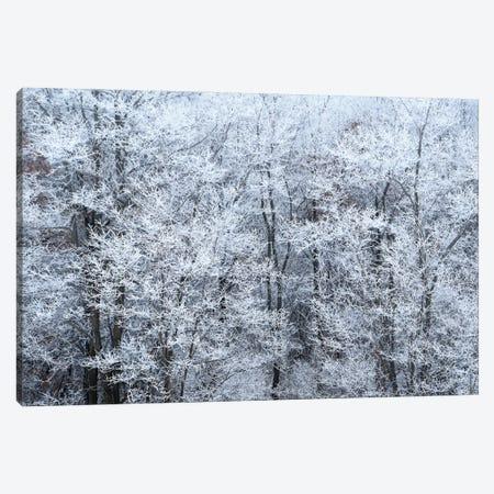 Winter Fog Canvas Print #BWF602} by Brian Wolf Canvas Wall Art
