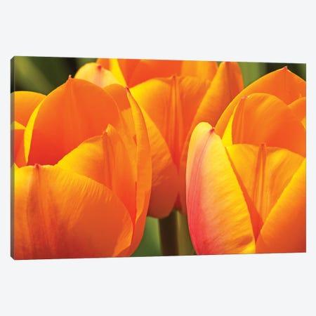 Trio Of Tulips Canvas Print #BWF614} by Brian Wolf Canvas Artwork