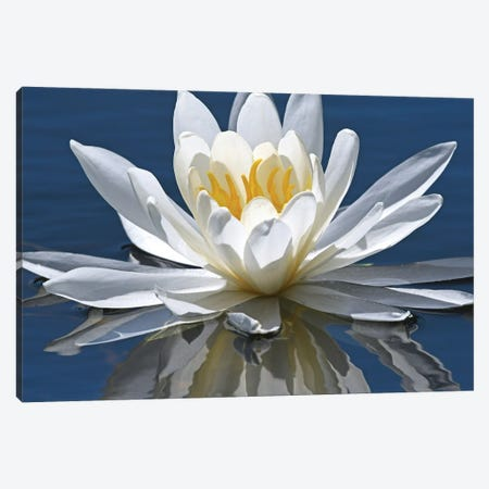 Reflection Of Water Lily Canvas Print #BWF622} by Brian Wolf Canvas Art