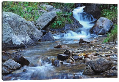 Cascades At Alberta Falls Canvas Art Print