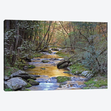 Colorful Creek Canvas Print #BWF91} by Brian Wolf Canvas Artwork